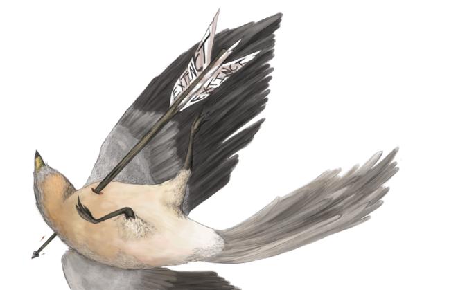 Save-the-Birds