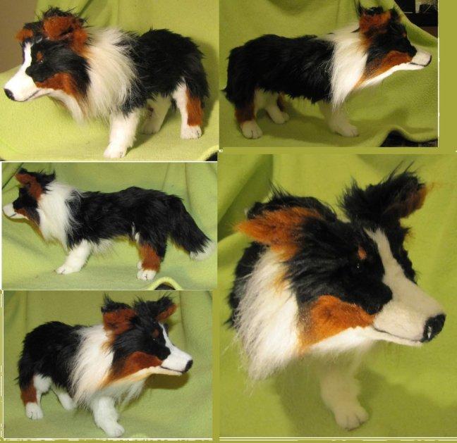Poochie the Shetland Sheepdog