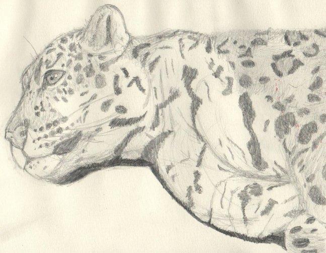 jaguar_by_bindah-d8kak78