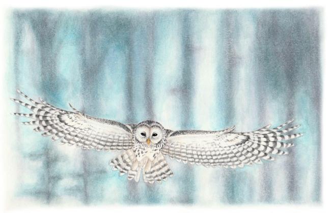 4_ural-owl