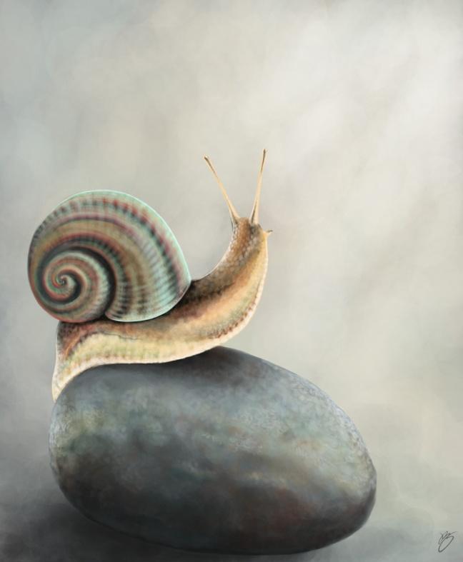 8_snail