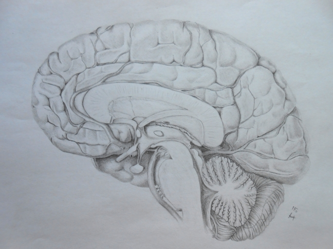 section brain