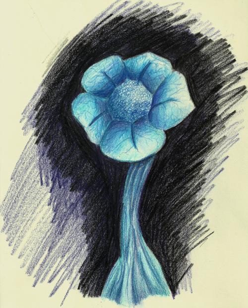 echoflower