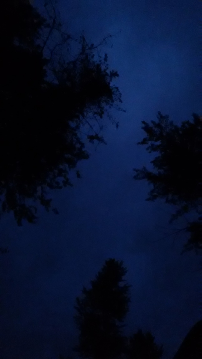 10-night-sky-between-trees